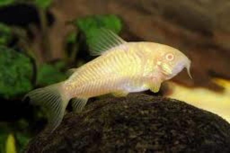 grond vissen aquarium