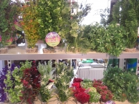 Kunst planten